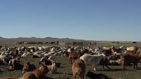 Группа в составе козы при на лошади предпосылки и кочевник управляя мотоцилк сток-видео