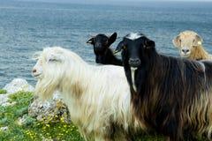 Группа в составе козы Стоковые Фото