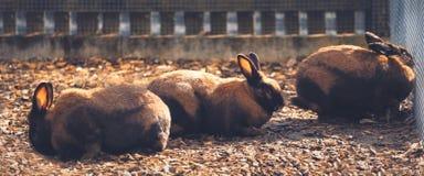 Группа в составе коричневые кролики за загородкой стоковое изображение rf