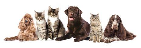 Группа в составе коты и собаки Стоковое Изображение