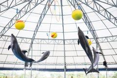 Группа в составе красивая выставка дельфина на аквариуме Стоковые Фото
