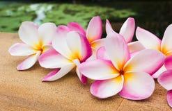 Группа в составе красивый сладостный розовый plumeria цветка украшенная на плитке утеса около бассейна Стоковая Фотография RF