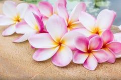 Группа в составе красивый сладостный розовый plumeria цветка украшенная на плитке утеса около бассейна Стоковое Фото