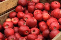 Группа в составе красные яблоки в деревянной коробке Стоковое Изображение RF