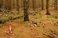 Группа в составе красные toadstools Стоковое Фото