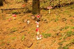 Группа в составе красные toadstools Стоковое Изображение RF