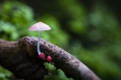 Группа в составе крошечный гриб растет вверх на древесине Стоковое Изображение RF