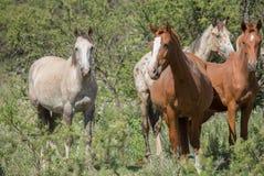 Группа в составе лошади в лесе стоковое фото rf