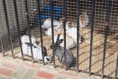 Группа в составе молодые кролики в ферме за fencerabbit внутри далеко стоковое фото rf