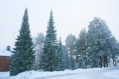 Группа в составе морозные деревья стоковые изображения