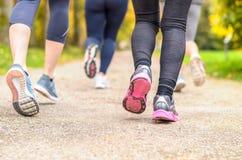 Группа в составе молодая женщина jogging совместно в парке Стоковая Фотография RF