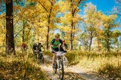 Группа в составе молодой след катания велосипедиста горного велосипеда на солнечном дне Стоковые Изображения