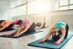 Группа в составе молодые женщины делая тренировку йоги стоковые изображения rf