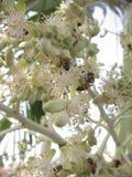 Группа в составе насекомые подавая на белых цветках на тропической пальме в Венесуэле Стоковое фото RF