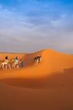 Группа в составе отключение верблюда на пустыне Сахары Стоковые Фотографии RF