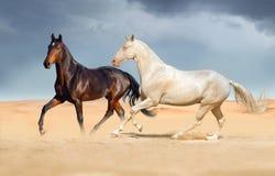Группа в составе лошадь, который побежали на песке пустыни Стоковое фото RF