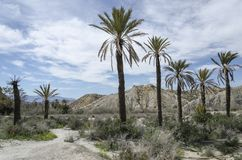 Группа в составе пальмы рядом с дорогой в пустыне Tabernas стоковое фото rf