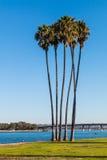 Группа в составе пальмы на заливе полета в Сан-Диего Стоковая Фотография