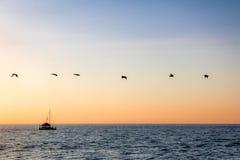 Группа в составе пеликаны летая на пляж на заходе солнца - Puerto Vallarta, Халиско, Мексику стоковые фото