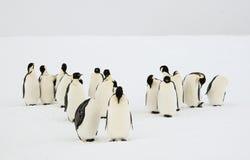 Группа в составе пингвины императора Стоковые Изображения RF