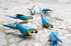 Группа в составе попугай Стоковое Изображение