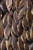 Группа в составе пресноводная рыба Стоковые Фотографии RF