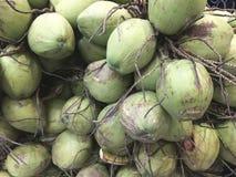 Группа в составе предпосылка кокосов Стоковое Изображение RF