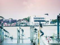 Группа в составе птица голубя от стороны chao Рекы Phraya с восходом солнца Стоковая Фотография RF