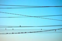 Группа в составе птица на проводах Стоковое Изображение RF