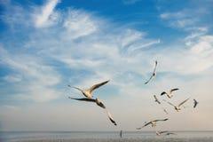 Группа в составе птицы летая на заход солнца Стоковые Фотографии RF