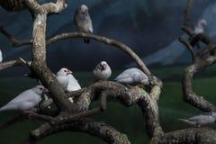 Группа в составе птицы на ветви Стоковые Изображения RF