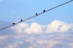 Группа в составе птицы поя весной Стоковая Фотография RF