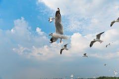 Группа в составе птицы скользя на голубом небе Стоковое фото RF