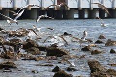 группа в составе птицы Стоковые Изображения RF