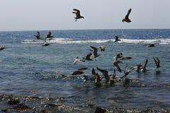 группа в составе птицы Стоковая Фотография