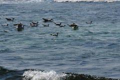 группа в составе птицы Стоковая Фотография RF