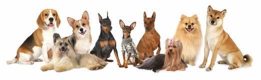 Группа в составе различные собаки размера стоковые изображения rf