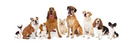 Группа в составе различные собаки размера стоковое изображение rf