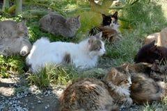 Группа в составе рассеянные коты стоковая фотография rf