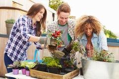 Группа в составе друзья засаживая сад крыши совместно Стоковое Изображение RF