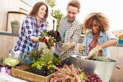 Группа в составе друзья засаживая сад крыши совместно Стоковые Фотографии RF