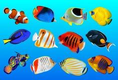 Группа в составе рыбы Стоковая Фотография