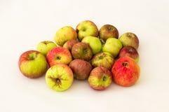 Группа в составе свежие органические яблоки на белой предпосылке Стоковая Фотография RF
