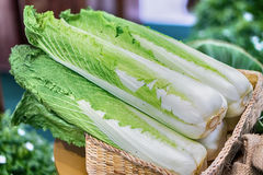 Группа в составе свежий органически, который выросли свежий салат romaine Стоковые Фото