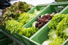 Группа в составе свежий салат салата на рынке Стоковая Фотография