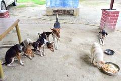 Группа в составе собаки ждать для еды еды Стоковая Фотография RF