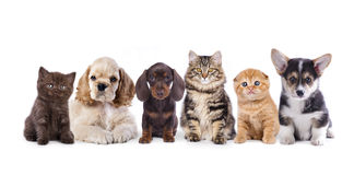 Группа в составе собаки и котята Стоковое Фото