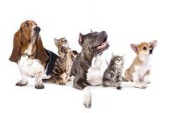 Группа в составе собаки и kitens Стоковая Фотография