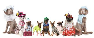 Группа в составе собаки одетые в одеждах стоковое изображение