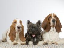 Группа в составе 3 собаки стоковые изображения rf